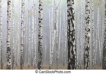 βέργα ραβδισμού , δάσοs