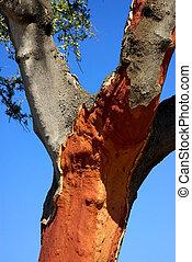 βαριά ξύλινη πόρτα , δέντρο , σε , πορτογαλία