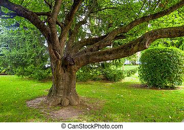 βγάζω κλαδιά , δυνατός , δέντρο