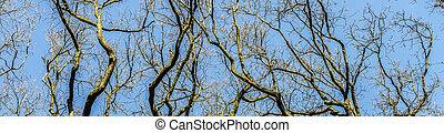 βελανιδιά , δέντρα , μέσα , άνοιξη , κάτω από , μπλε , καθαρά