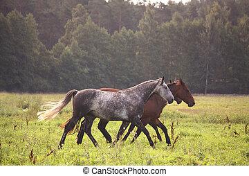 βοσκή , άλογο , τρέξιμο , ελεύθερος , αγέλη