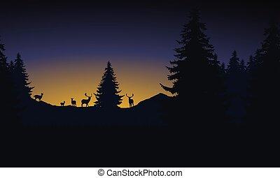 βουνό , ήλιοs , ελάφι , αγέλη , ανατέλλων , δάσοs , κάτω από , πρωί , τοπίο , ουρανόs