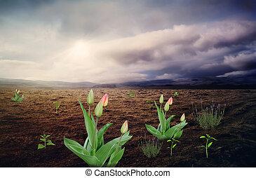 βουνό , surreal , landscape:, άγονος , λουλούδια , valley.