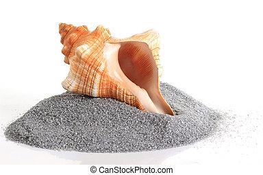 βούκινο , sand., όστρακο , απομονωμένος , θάλασσα