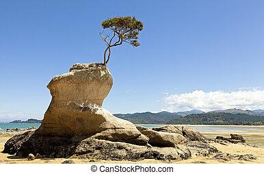 βράχοs , δέντρο