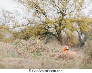βρέφος δεσποινάριο , κήπος , παίξιμο