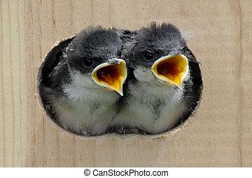 βρέφος πουλί , μέσα , ένα , πουλί εμπορικός οίκος