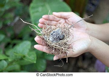 βρέφος πουλί , μέσα , ένα , nest.