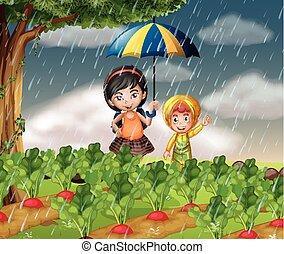 βρέχει , μικρόκοσμος , πότε , κήπος , αυτό