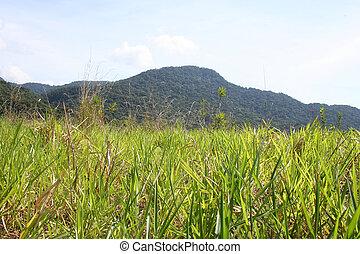 βραζιλία , ζούγκλα , λόφος