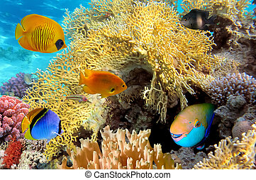 βρεχάμενος ανθρώπινες ζωές , hard-coral, αίγυπτος , θάλασσα...