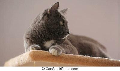 γάτα , ακινησία αναμμένος , δικός του , γλώσσα