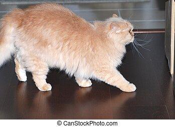 γάτα , ανακριτού αδιαπέραστος