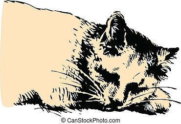 γάτα , εικόνα