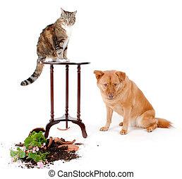 γάτα , και , σκύλοs , troublemakers