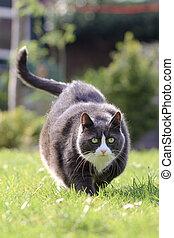 γάτα , καταλληλότητα