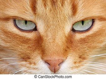 γάτα , μάτια
