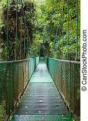 γέφυρα , ανακοπή , rainforest