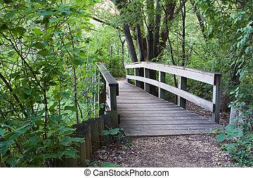γέφυρα , δάσοs