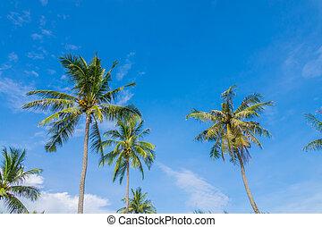 γαλάζιος ουρανός , ινδική καρύδα αγχόνη , πάνω