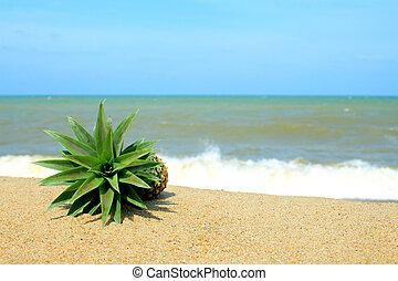 γαλάζιος ουρανός , παραλία , ανανάς