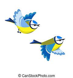 γαλάζιο αιγίθαλος , ιπτάμενος , απομονωμένος , φόντο , άσπρο