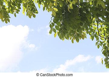 γαλάζιο φύλλο , πράσινο , sky.