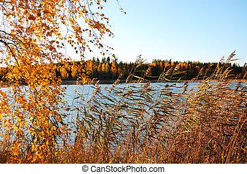 γαλήνειος , λίμνη , θέα , φινλανδία , φθινόπωρο