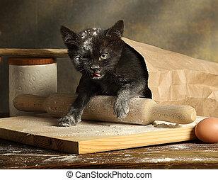 γατάκι , μικρό , αόρ. του get , τσάντα , αλεύρι , μαύρο , ...