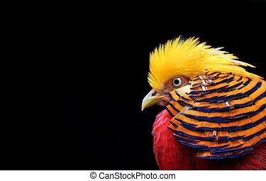 γεμάτος χρώμα πουλί