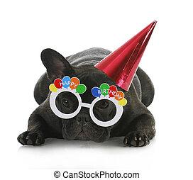 γενέθλια , σκύλοs