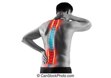 γενική ιδέα , πονώ , απομονωμένος , scoliosis , σπονδυλική στήλη , φόντο , μεταχείρηση , ισχιαλγία , χειροπράκτορας , άσπρο , οσφυαλγία , άντραs