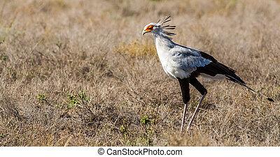 8 ίντσες πουλί φωτογραφίες