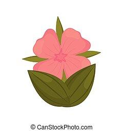 γεράνι , λουλούδι , φύλλα , οφθαλμός