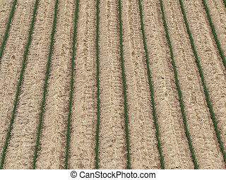 γεωργία αγρός , φόντο