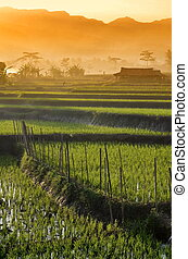 γεωργία , ρύζι αγρός , τοπίο
