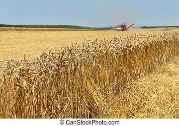 γεωργία , σιτάλευρο αποθηκεύω