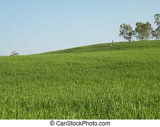 γεωργία , φόντο