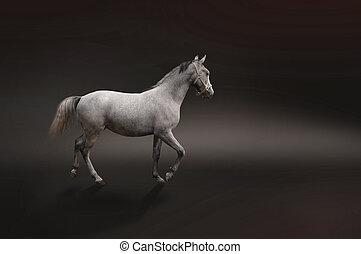 γκρί , άλογο , απομονωμένος , επάνω , μαύρο
