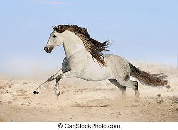 γκρί , andalusian, άλογο , εγκαταλείπω