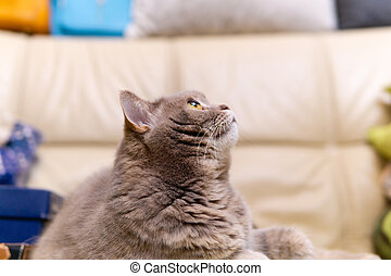 γκρο πλαν , ζεσεεδ , ατενίζω ανακριτού , γάτα