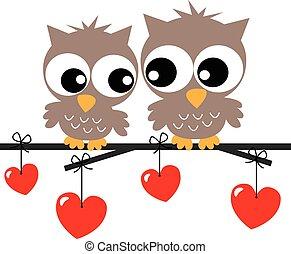 γλυκός , αγάπη , δυο , κουκουβάγιες