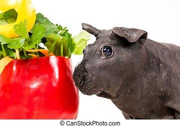 γουρούνι , ισχνός , μαύρο , γκινέα , κέηκ , λαχανικό