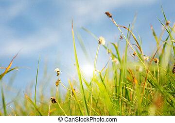 γρασίδι , ειδυλλιακός , ηλιακό φως