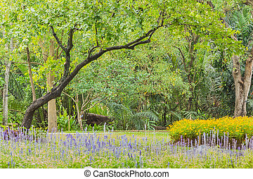 γρασίδι, πάρκο, δέντρα