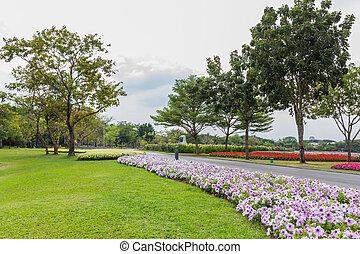 γρασίδι , πάρκο , δέντρα