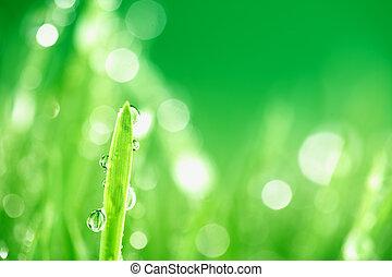 γρασίδι , φύση , φόντο