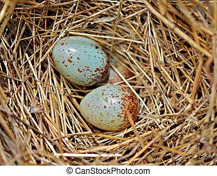γραφικός , μικροσκοπικός , πουλί , αυγά