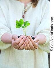 γυναίκα ανάμιξη , κράτημα , έδαφος , με , πράσινο , βλαστάνω