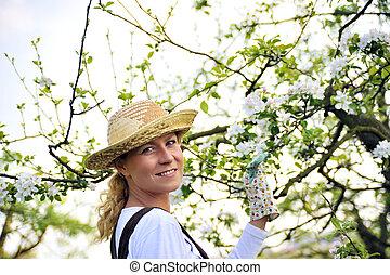 γυναίκα , κηπουρική , μήλο δενδρόκηπος , δέντρο , - , νέος